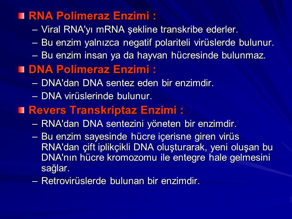RNA Polimeraz Enzimi : –Viral RNA'yı mRNA şekline transkribe ederler. –Bu enzim yalnızca negatif polariteli virüslerde bulunur. –Bu enzim insan ya da
