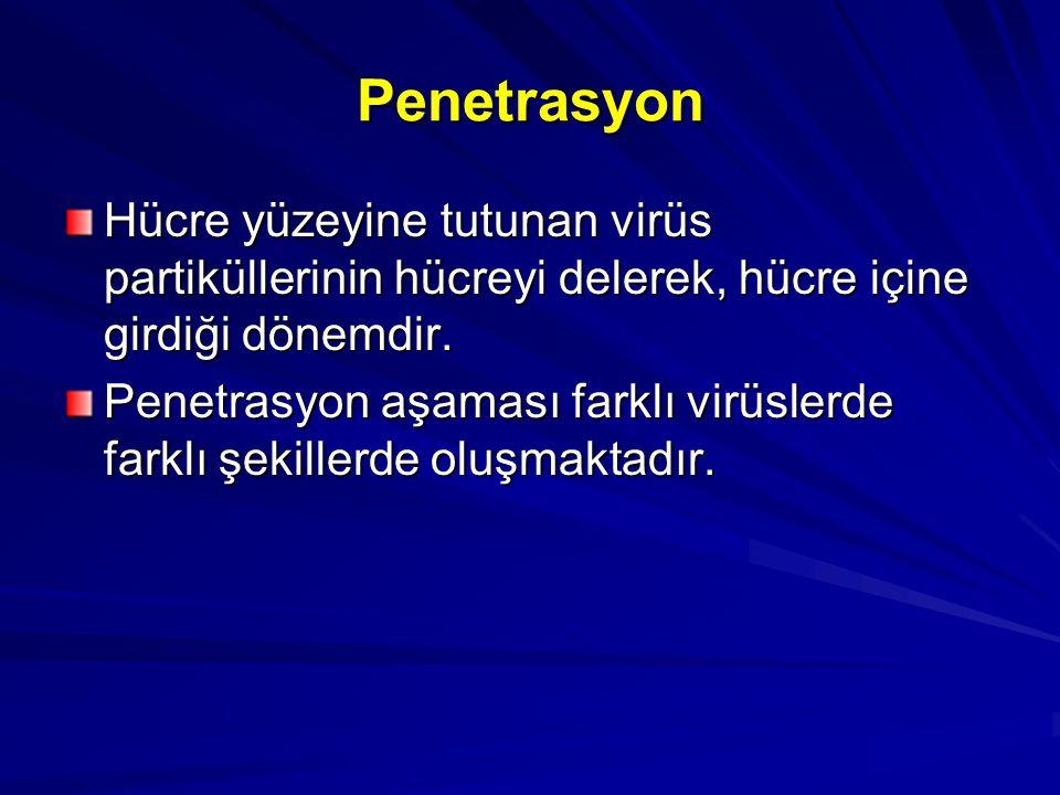 Penetrasyon Hücre yüzeyine tutunan virüs partiküllerinin hücreyi delerek, hücre içine girdiği dönemdir. Penetrasyon aşaması farklı virüslerde farklı ş