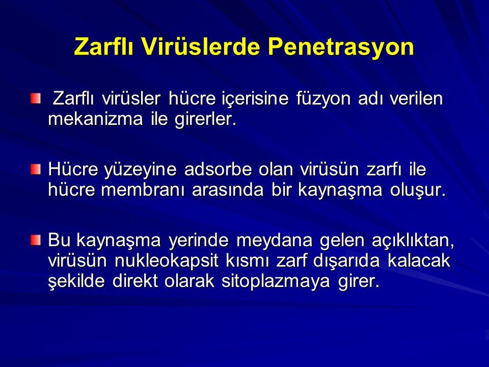 Zarflı Virüslerde Penetrasyon Zarflı virüsler hücre içerisine füzyon adı verilen mekanizma ile girerler. Zarflı virüsler hücre içerisine füzyon adı ve