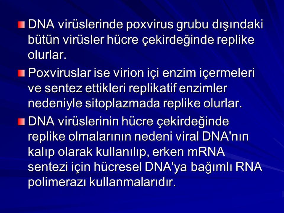 DNA virüslerinde poxvirus grubu dışındaki bütün virüsler hücre çekirdeğinde replike olurlar. Poxviruslar ise virion içi enzim içermeleri ve sentez ett