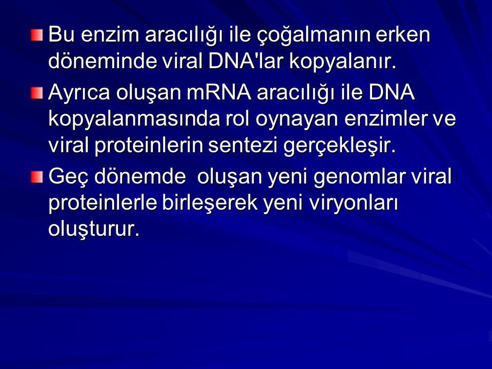 Bu enzim aracılığı ile çoğalmanın erken döneminde viral DNA'lar kopyalanır. Ayrıca oluşan mRNA aracılığı ile DNA kopyalanmasında rol oynayan enzimler