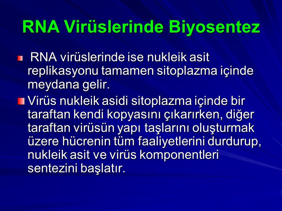 RNA Virüslerinde Biyosentez RNA virüslerinde ise nukleik asit replikasyonu tamamen sitoplazma içinde meydana gelir. RNA virüslerinde ise nukleik asit
