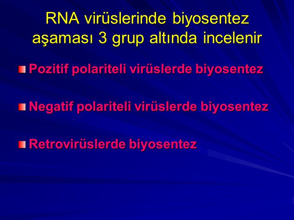 RNA virüslerinde biyosentez aşaması 3 grup altında incelenir Pozitif polariteli virüslerde biyosentez Negatif polariteli virüslerde biyosentez Retrovi