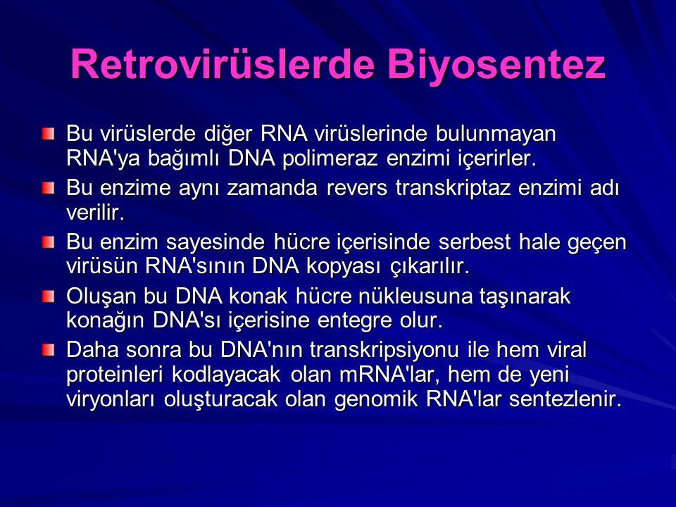Retrovirüslerde Biyosentez Bu virüslerde diğer RNA virüslerinde bulunmayan RNA'ya bağımlı DNA polimeraz enzimi içerirler. Bu enzime aynı zamanda rever