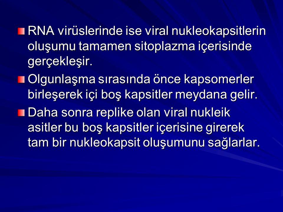 RNA virüslerinde ise viral nukleokapsitlerin oluşumu tamamen sitoplazma içerisinde gerçekleşir. Olgunlaşma sırasında önce kapsomerler birleşerek içi b