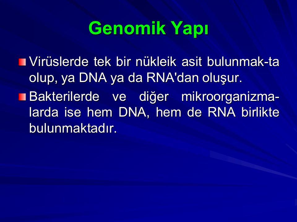 Genomik Yapı Virüslerde tek bir nükleik asit bulunmak-ta olup, ya DNA ya da RNA'dan oluşur. Bakterilerde ve diğer mikroorganizma- larda ise hem DNA, h