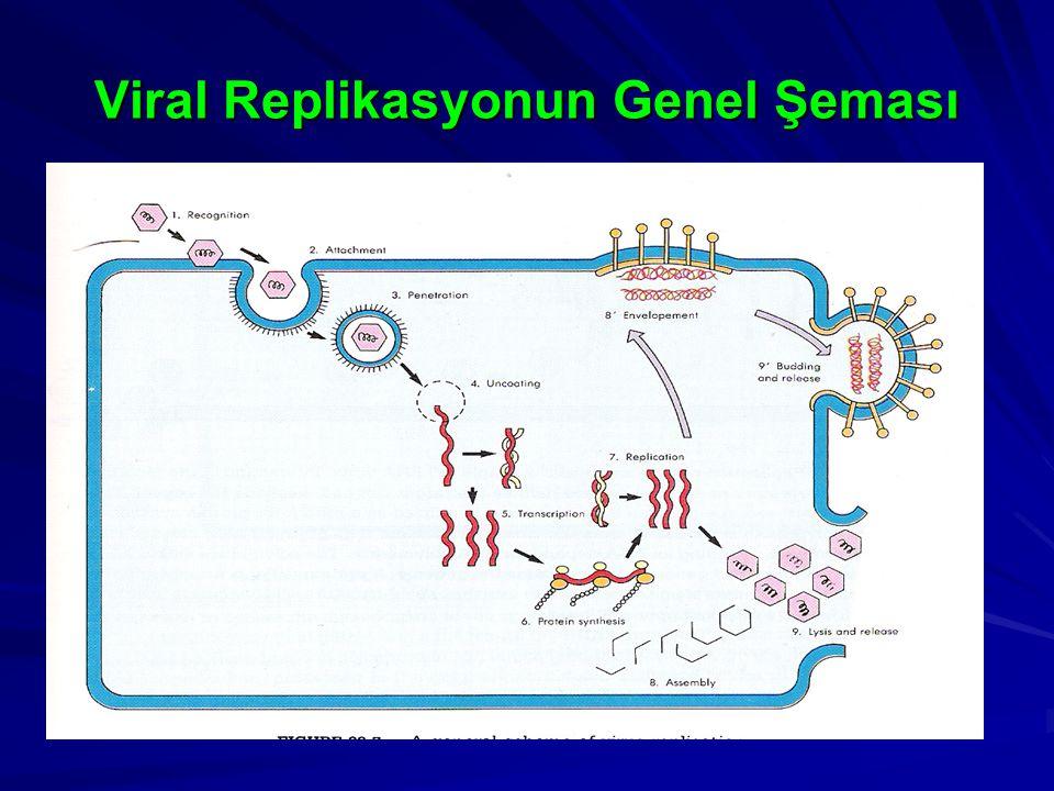 Viral Replikasyonun Genel Şeması