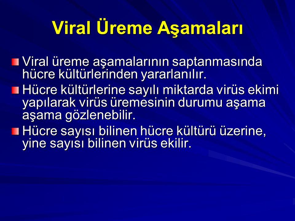 Viral Üreme Aşamaları Viral üreme aşamalarının saptanmasında hücre kültürlerinden yararlanılır. Hücre kültürlerine sayılı miktarda virüs ekimi yapılar