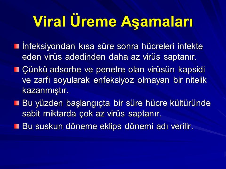 Viral Üreme Aşamaları İnfeksiyondan kısa süre sonra hücreleri infekte eden virüs adedinden daha az virüs saptanır. Çünkü adsorbe ve penetre olan virüs