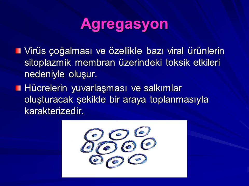 Agregasyon Virüs çoğalması ve özellikle bazı viral ürünlerin sitoplazmik membran üzerindeki toksik etkileri nedeniyle oluşur. Hücrelerin yuvarlaşması