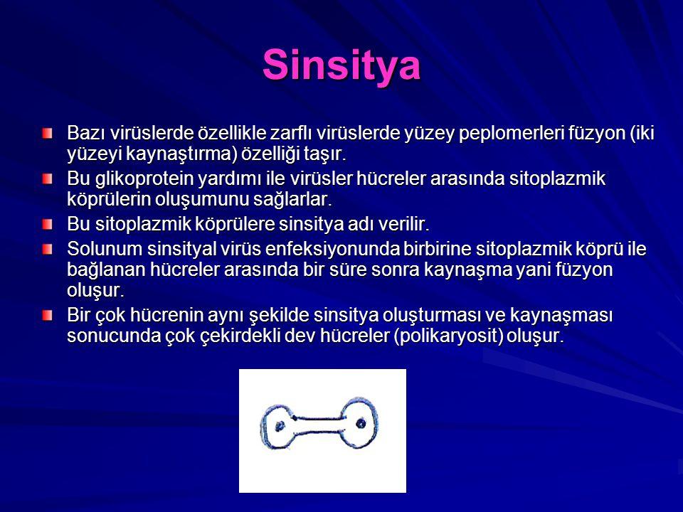 Sinsitya Bazı virüslerde özellikle zarflı virüslerde yüzey peplomerleri füzyon (iki yüzeyi kaynaştırma) özelliği taşır. Bu glikoprotein yardımı ile vi