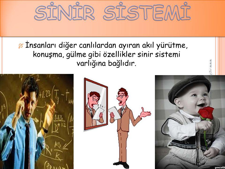  İnsanları diğer canlılardan ayıran akıl yürütme, konuşma, gülme gibi özellikler sinir sistemi varlığına bağlıdır.