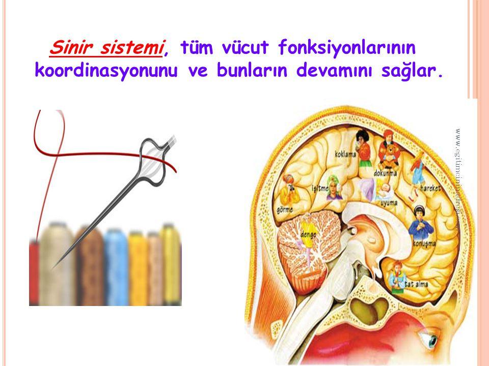 Sinir sistemi, tüm vücut fonksiyonlarının koordinasyonunu ve bunların devamını sağlar.