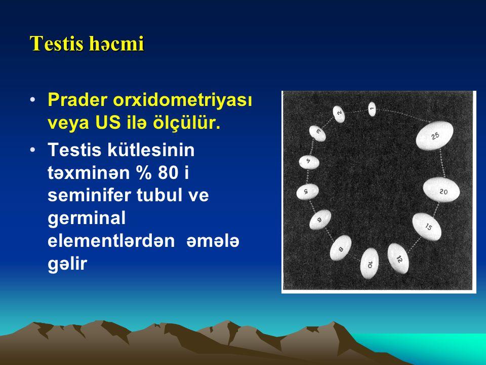 Testis həcmi Prader orxidometriyası veya US ilə ölçülür. Testis kütlesinin təxminən % 80 i seminifer tubul ve germinal elementlərdən əmələ gəlir