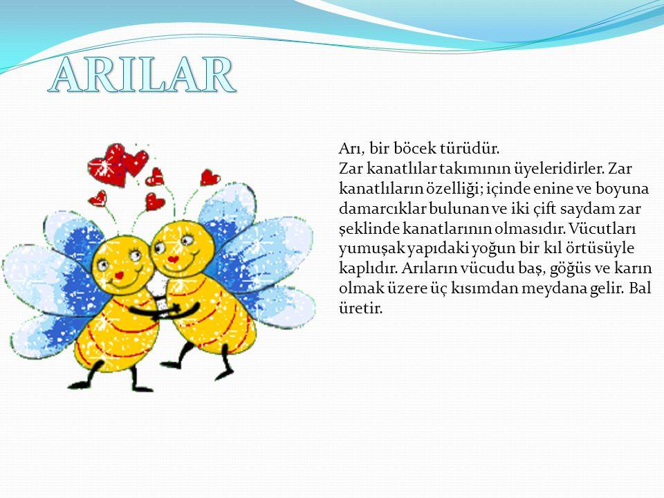 Arı, bir böcek türüdür.Zar kanatlılar takımının üyeleridirler.