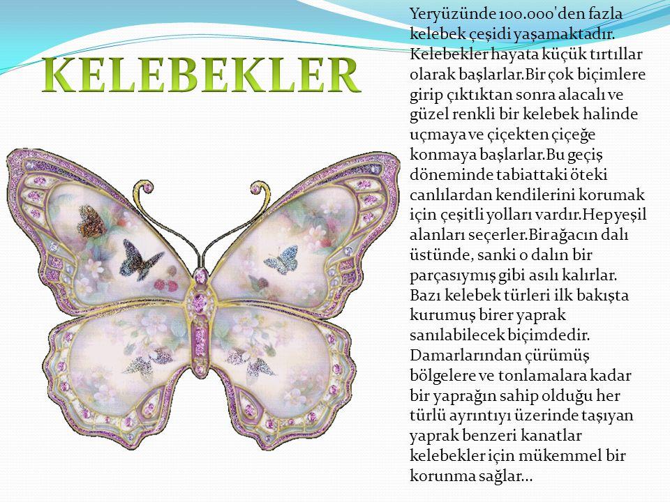 Yeryüzünde 100.000 den fazla kelebek çeşidi yaşamaktadır.