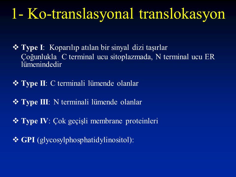  Type I: Koparılıp atılan bir sinyal dizi taşırlar Çoğunlukla C terminal ucu sitoplazmada, N terminal ucu ER lümenindedir  Type II: C terminali lümende olanlar  Type III: N terminali lümende olanlar  Type IV: Çok geçişli membrane proteinleri  GPI (glycosylphosphatidylinositol): 1- Ko-translasyonal translokasyon