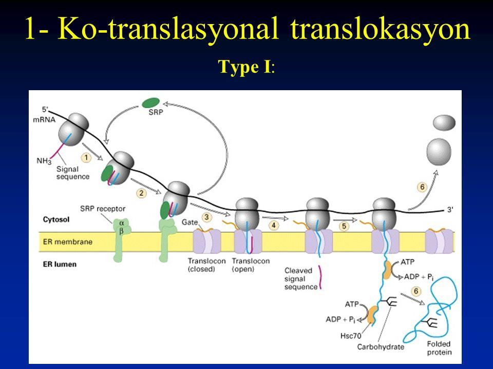 1- Ko-translasyonal translokasyon Type I: