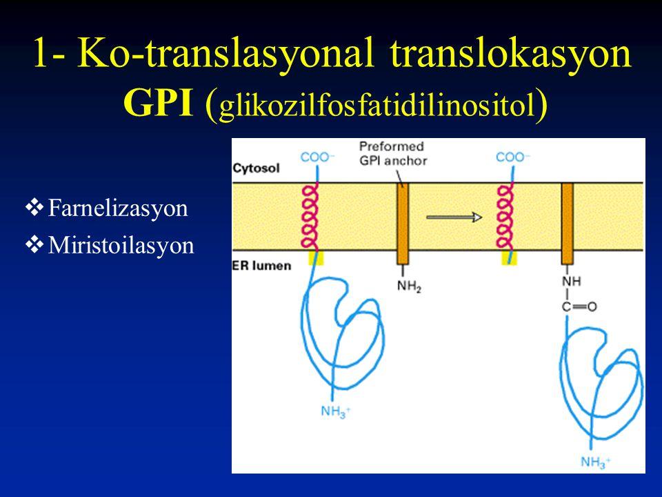 1- Ko-translasyonal translokasyon GPI ( glikozilfosfatidilinositol )  Farnelizasyon  Miristoilasyon