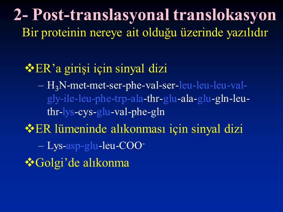 2- Post-translasyonal translokasyon Bir proteinin nereye ait olduğu üzerinde yazılıdır  ER'a girişi için sinyal dizi –H 3 N-met-met-ser-phe-val-ser-l