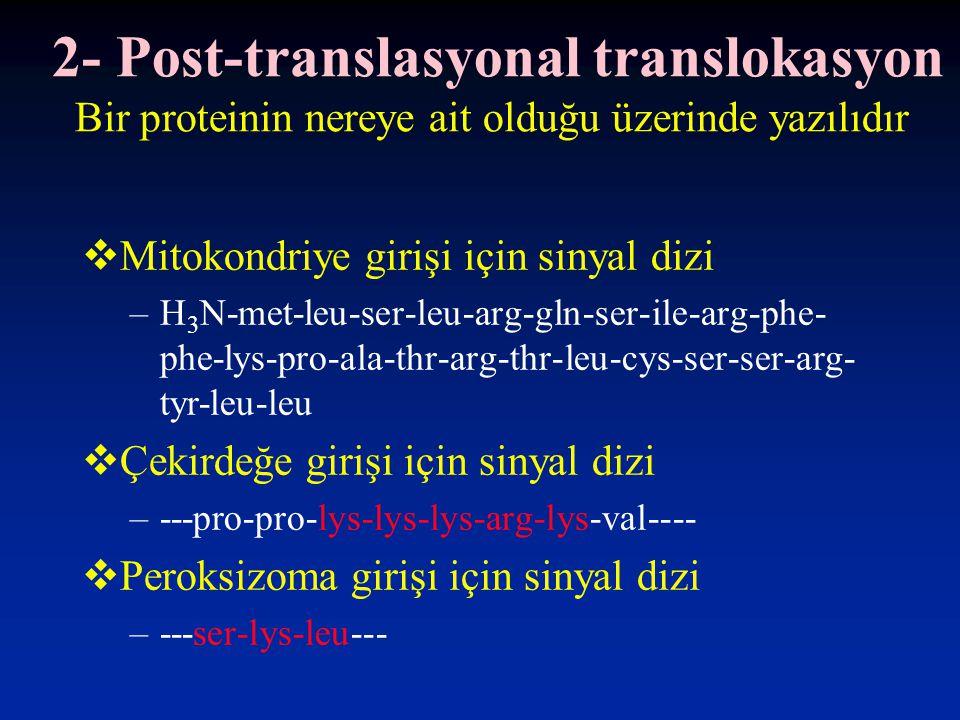 2- Post-translasyonal translokasyon Bir proteinin nereye ait olduğu üzerinde yazılıdır  Mitokondriye girişi için sinyal dizi –H 3 N-met-leu-ser-leu-arg-gln-ser-ile-arg-phe- phe-lys-pro-ala-thr-arg-thr-leu-cys-ser-ser-arg- tyr-leu-leu  Çekirdeğe girişi için sinyal dizi –---pro-pro-lys-lys-lys-arg-lys-val----  Peroksizoma girişi için sinyal dizi –---ser-lys-leu---