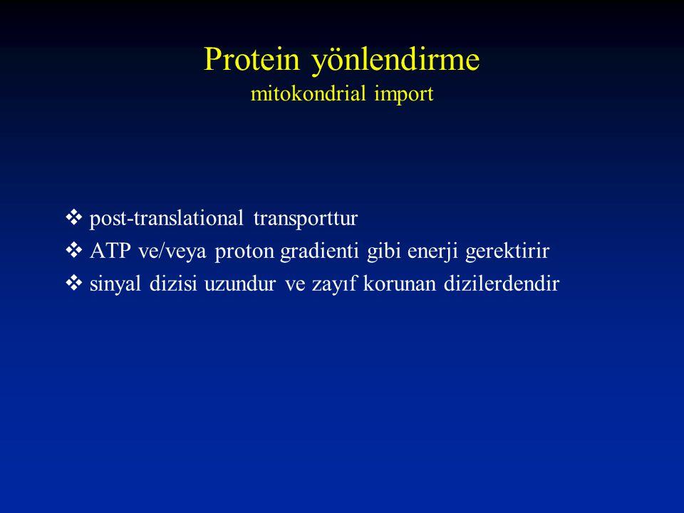 Protein yönlendirme mitokondrial import  post-translational transporttur  ATP ve/veya proton gradienti gibi enerji gerektirir  sinyal dizisi uzundu