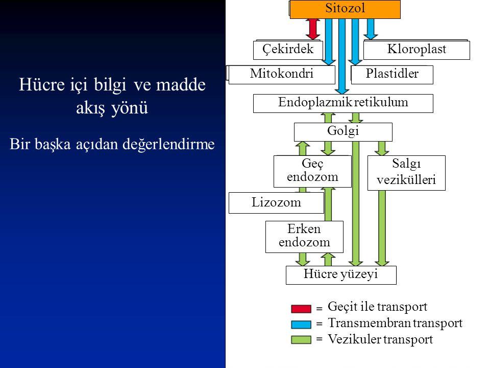 Hücre içi bilgi ve madde akış yönü Geçit ile transport Transmembran transport Vezikuler transport Hücre yüzeyi Erken endozom Lizozom ke y Geç endozom