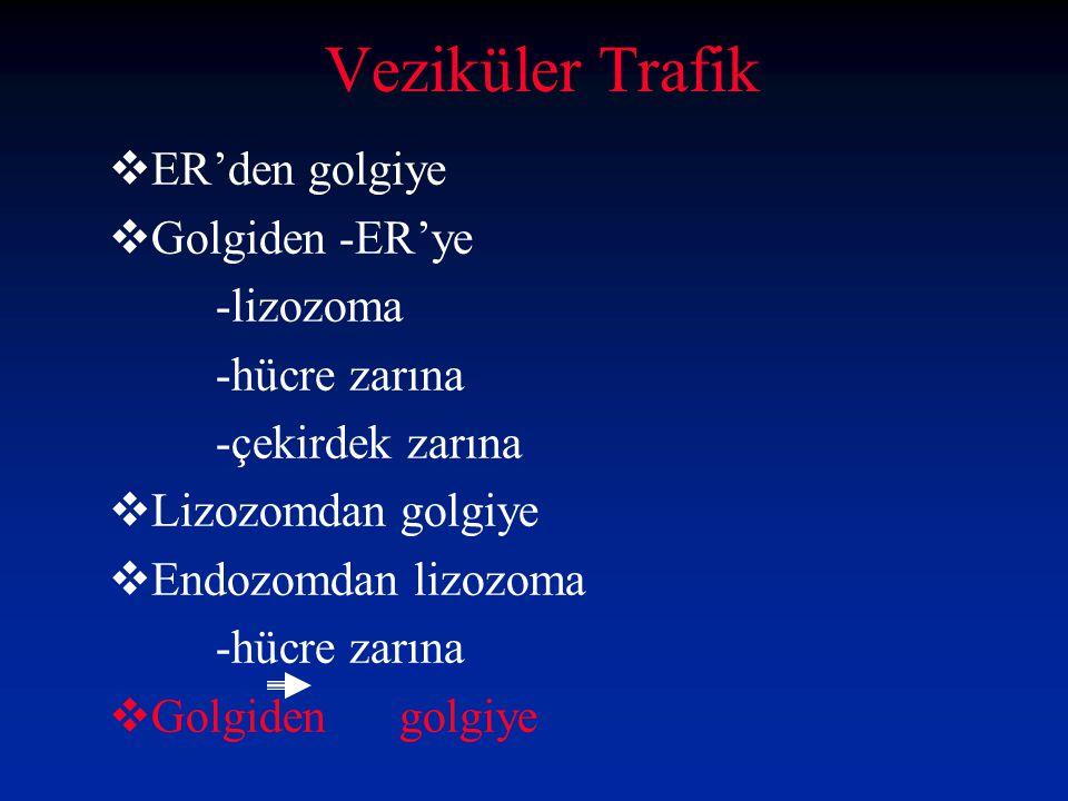  ER'den golgiye  Golgiden -ER'ye -lizozoma -hücre zarına -çekirdek zarına  Lizozomdan golgiye  Endozomdan lizozoma -hücre zarına  Golgiden golgiy