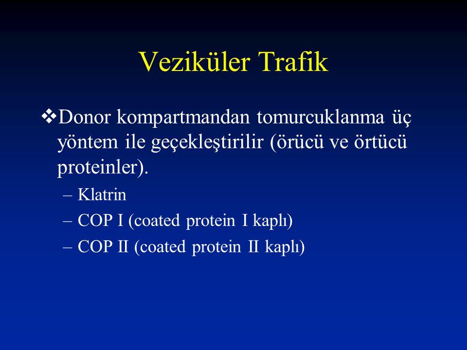  Donor kompartmandan tomurcuklanma üç yöntem ile geçekleştirilir (örücü ve örtücü proteinler). –Klatrin –COP I (coated protein I kaplı) –COP II (coat