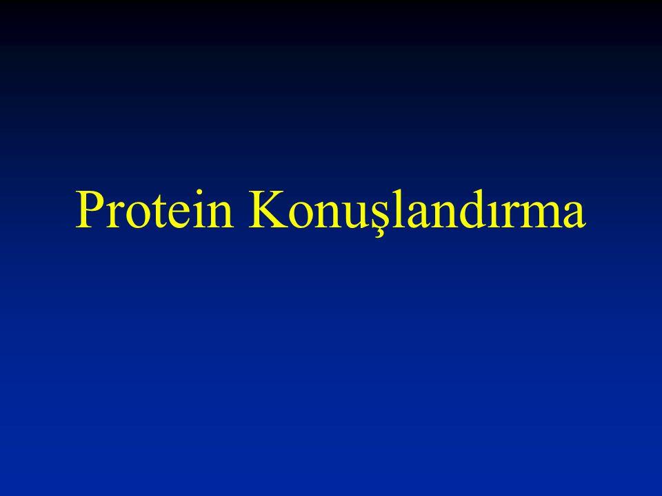 Hücre içinde protein konuşlandırmada üç yöntem kullanılır: 1- Ko-translasyonal - translokasyon yani protein sentezinin, proteinin görev yerinde yapılması 2- Post-translasyonal – translakasyon yani sentez sonrası proteinin görev yerine taşınması 3- Vesikular – transport Proteinin bir vezikül aracılığıyla görev yerine taşınması –Membran üzerine bağlı –Vezikül lümeninde