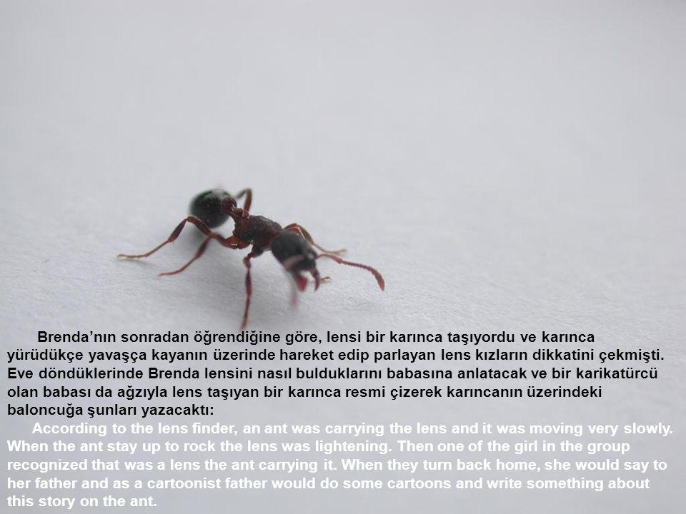 Brenda'nın sonradan öğrendiğine göre, lensi bir karınca taşıyordu ve karınca yürüdükçe yavaşça kayanın üzerinde hareket edip parlayan lens kızların dikkatini çekmişti.