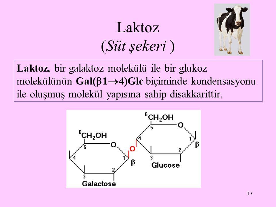 13 Laktoz (Süt şekeri ) Laktoz, bir galaktoz molekülü ile bir glukoz molekülünün Gal(  1  4)Glc biçiminde kondensasyonu ile oluşmuş molekül yapısına