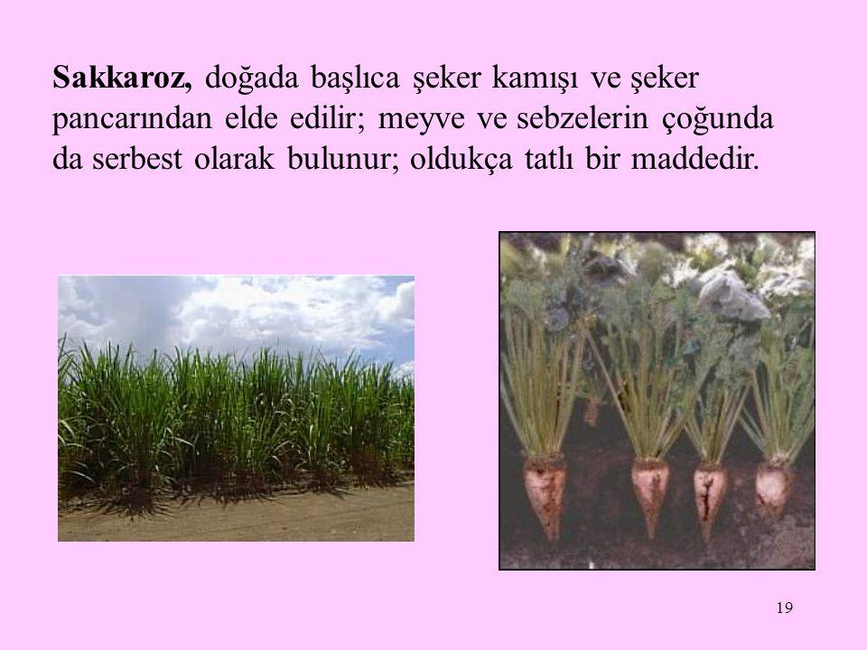 19 Sakkaroz, doğada başlıca şeker kamışı ve şeker pancarından elde edilir; meyve ve sebzelerin çoğunda da serbest olarak bulunur; oldukça tatlı bir maddedir.