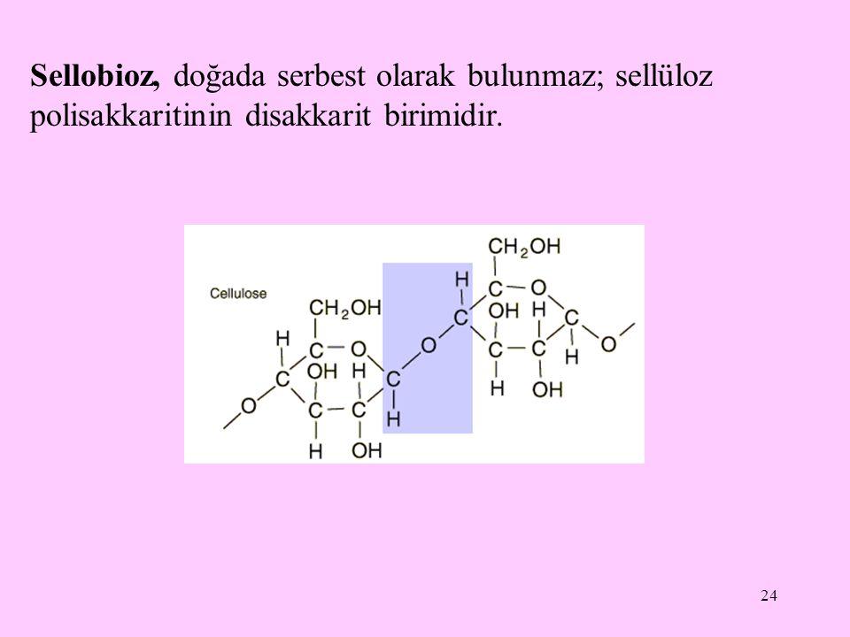 24 Sellobioz, doğada serbest olarak bulunmaz; sellüloz polisakkaritinin disakkarit birimidir.