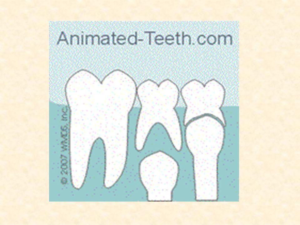 Dişlerimizin sağlıklı ve güçlü olması için düzenli yemek yemeliyiz.