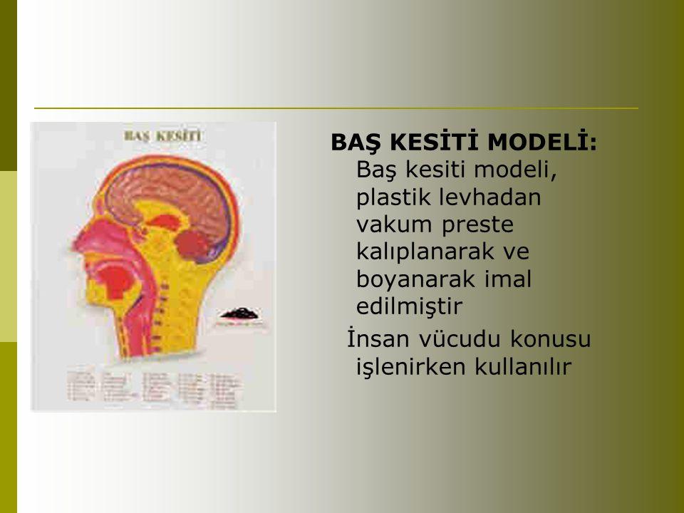 BAŞ KESİTİ MODELİ: Baş kesiti modeli, plastik levhadan vakum preste kalıplanarak ve boyanarak imal edilmiştir İnsan vücudu konusu işlenirken kullanılı