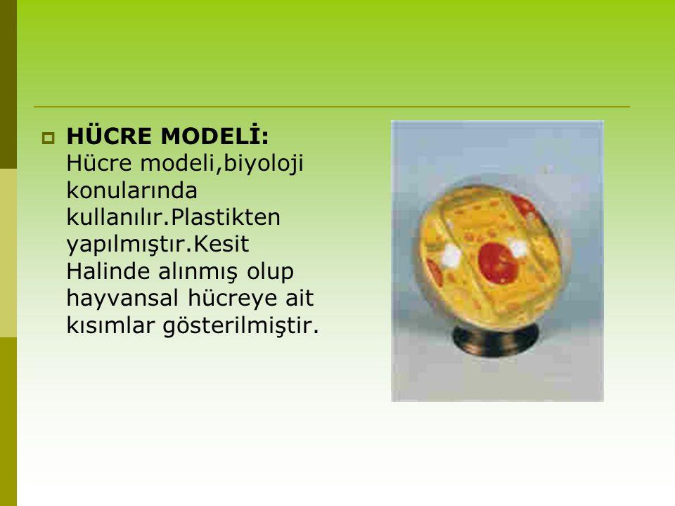  HÜCRE MODELİ: Hücre modeli,biyoloji konularında kullanılır.Plastikten yapılmıştır.Kesit Halinde alınmış olup hayvansal hücreye ait kısımlar gösteril