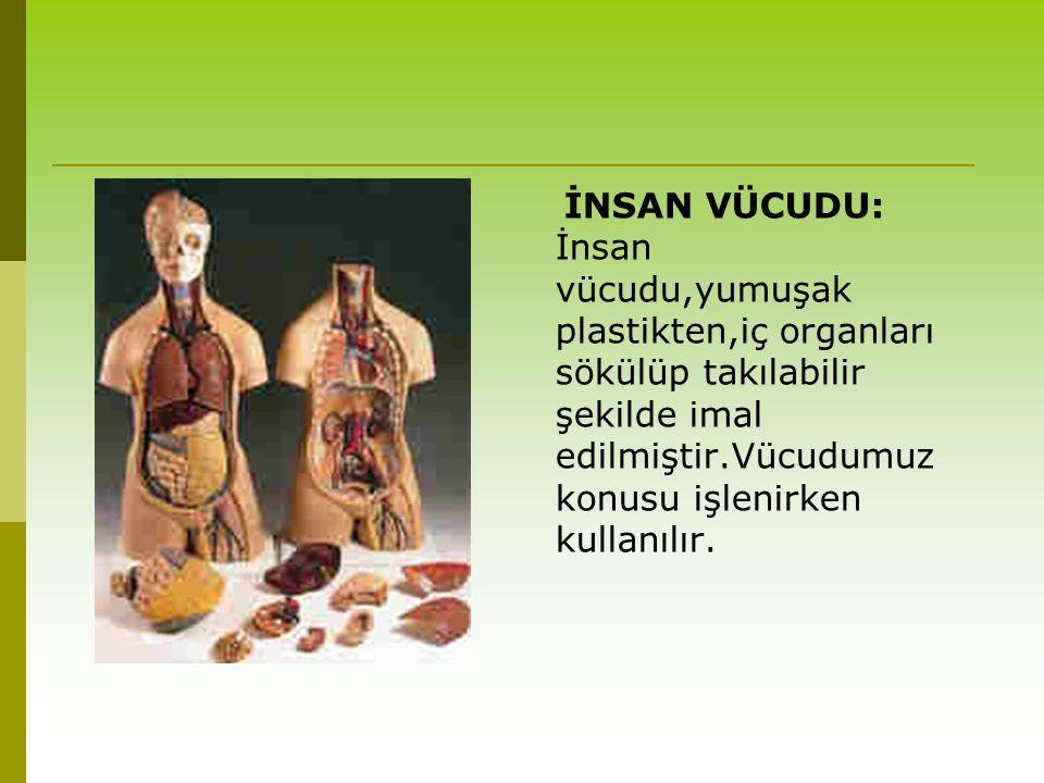 İNSAN VÜCUDU: İnsan vücudu,yumuşak plastikten,iç organları sökülüp takılabilir şekilde imal edilmiştir.Vücudumuz konusu işlenirken kullanılır.