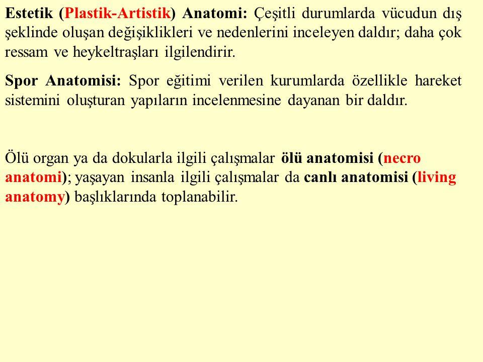 Estetik (Plastik-Artistik) Anatomi: Çeşitli durumlarda vücudun dış şeklinde oluşan değişiklikleri ve nedenlerini inceleyen daldır; daha çok ressam ve