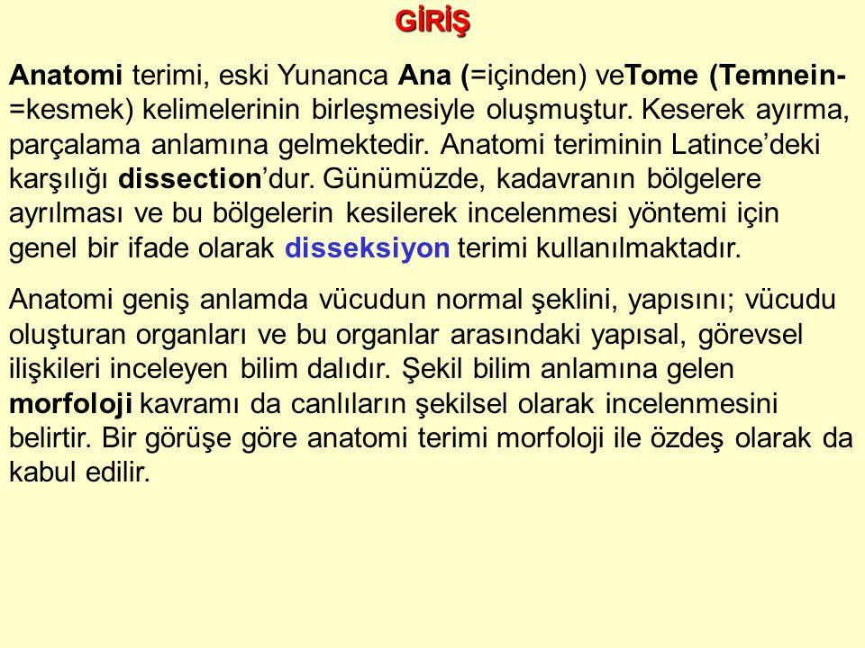 teres – yuvarlak thorax - göğüs kafesi trochlea – makara truncus - gövde tuber - tümsek, çıkıntı tuberculum - tümsekcik tuberositas - engebeli çıkıntı turcicus - Türklerle ilgili umbilicus – göbek unguis - tırnak urina – idrar uterus - rahim vagina - kılıf, kın vena - toplardamar ventriculus – karın vertebra - omur vertex - tepe noktası vestibulum - giriş, antre