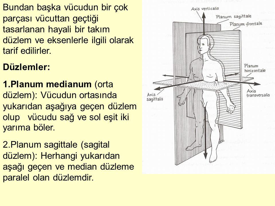 Bundan başka vücudun bir çok parçası vücuttan geçtiği tasarlanan hayali bir takım düzlem ve eksenlerle ilgili olarak tarif edilirler. Düzlemler: 1.Pla