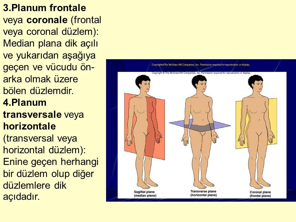 3.Planum frontale veya coronale (frontal veya coronal düzlem): Median plana dik açılı ve yukarıdan aşağıya geçen ve vücudu ön- arka olmak üzere bölen