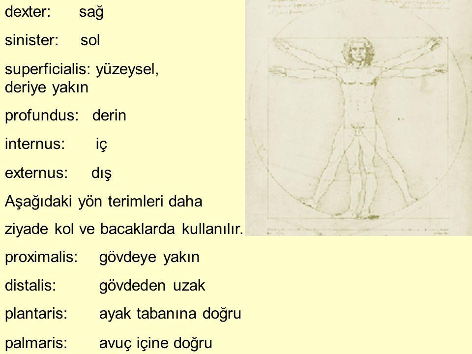 dexter: sağ sinister: sol superficialis: yüzeysel, deriye yakın profundus: derin internus: iç externus: dış Aşağıdaki yön terimleri daha ziyade kol ve