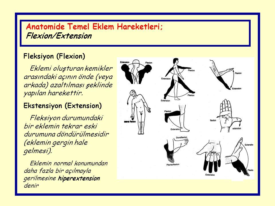Fleksiyon (Flexion) Eklemi oluşturan kemikler arasındaki açının önde (veya arkada) azaltılması şeklinde yapılan harekettir. Ekstensiyon (Extension) Fl