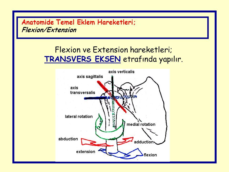 Flexion ve Extension hareketleri; TRANSVERS EKSEN etrafında yapılır. Anatomide Temel Eklem Hareketleri; Flexion/Extension