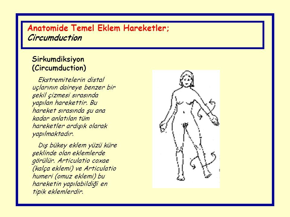 Anatomide Temel Eklem Hareketler; Circumduction Sirkumdiksiyon (Circumduction) Ekstremitelerin distal uçlarının daireye benzer bir şekil çizmesi sıras