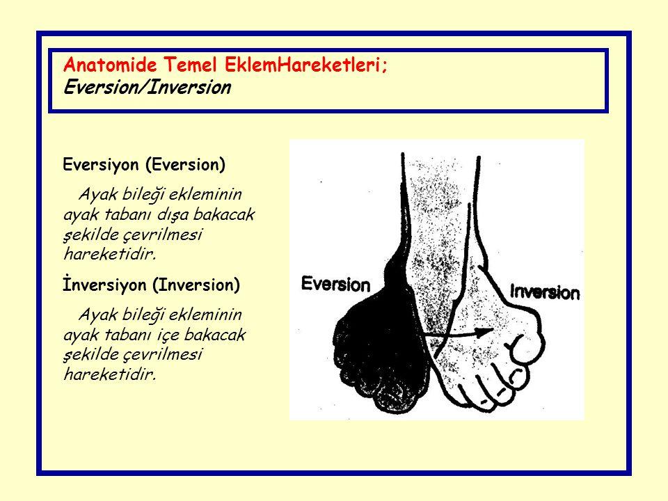Anatomide Temel EklemHareketleri; Eversion/Inversion Eversiyon (Eversion) Ayak bileği ekleminin ayak tabanı dışa bakacak şekilde çevrilmesi hareketidi