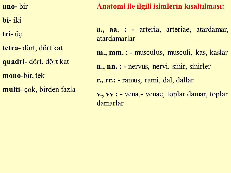 uno- bir bi- iki tri- üç tetra- dört, dört kat quadri- dört, dört kat mono-bir, tek multi- çok, birden fazla Anatomi ile ilgili isimlerin kısaltılması