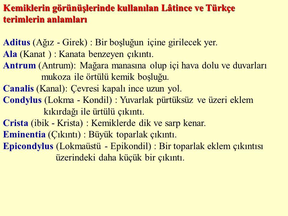 Kemiklerin görünüşlerinde kullanılan Lâtince ve Türkçe terimlerin anlamları Aditus (Ağız - Girek) : Bir boşluğun içine girilecek yer. Ala (Kanat ) : K
