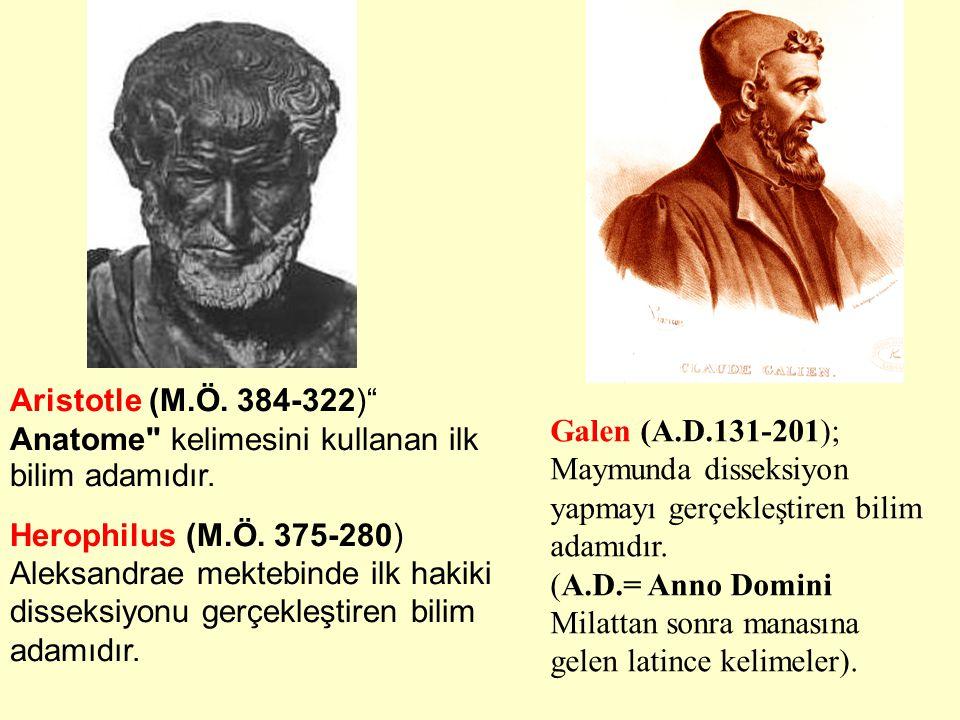 Daha sonra Anatomik araştırmalar Dini inançlar yüzünden hemen hemen 12 asır boyunca yasaklandı.